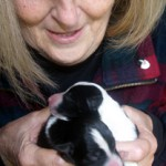 Ann with Border Collie puppies