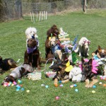 Drill team dogs rest after hunting treat-filled plastic eggs