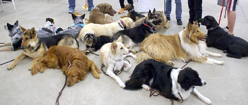 Diversity among dog types