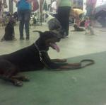 Mocha in training