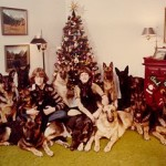 German Shepherds pose for Christmas picture