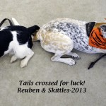 Reuben & Skittles with crossed tails