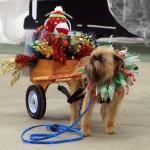 Rudy's wagon