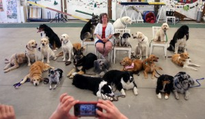 Moss and Miste are from and center. Linda Hayes, TDI tester from St Louis, poses with the dog and dog teams she certified during an April 2014 test.