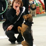 From our December 2013 holiday program -- demonstrating the value of tricks in teaching a dog to pay attention, comply, stay on task and have fun in the process.