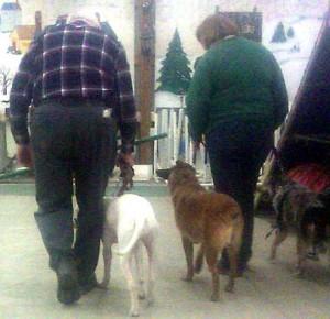 Walking side-by-side helps dogs learn new behaviors