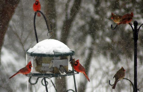 Winter scenes in the aftermath of snow – Ann Gafke's Teacher's Pet