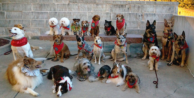 Therapy Dog Training St Louis
