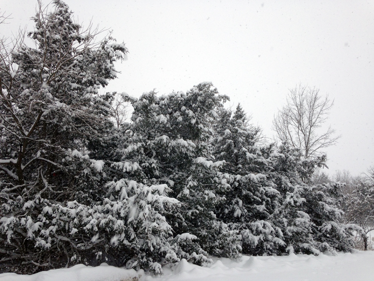Winter scenes in the aftermath of snow – Ann Gafke's