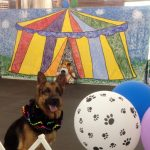 Stage_set_canine_circus_thumbnail